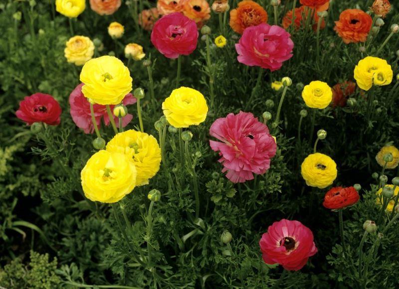 Exceptionnel Fleurs coupées fraiches: vente directe producteur dans le Var WE71